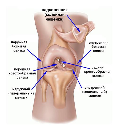 Сшивание связок коленного сустава цена вебинар рентген семиотика повреждений лучезапястного сустава